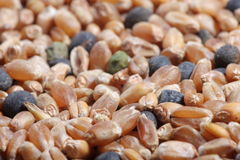 Corn seed mixture close-up Royalty Free Stock Photography