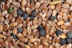 Corn seed mixture close-up Royalty Free Stock Images