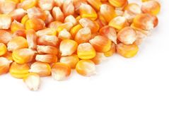 Corn seeds Stock Photos