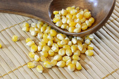 Corn seeds. On a wooden spoon Stock Photography