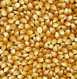 Corn seeds Royalty Free Stock Photo