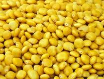Corn seeds. From Jerusalem old city Stock Photography