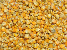 Corn seeds for animal feed Stock Photos