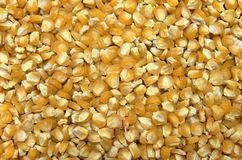 Corn seeds background. Dry yellow corn seeds close-up background texture Royalty Free Stock Photo