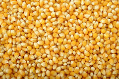 Corn seeds background Royalty Free Stock Images