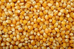 Corn seeds background Stock Photo