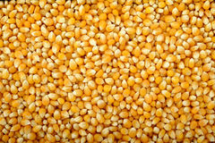 Corn seeds background Royalty Free Stock Photography