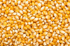 Corn Seeds Background Stock Image