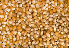 Corn seeds Stock Photography