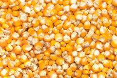 Corn seeds background. Royalty Free Stock Photo