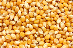 Corn seeds background Stock Photos