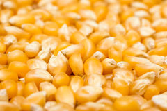 Corn Seeds Closeup Background Royalty Free Stock Photography