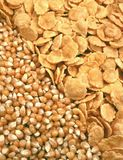 Corn seeds and corn-flakes Stock Images