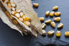 Corn Seeds in on Dark Stone Background. Good Harvest. Stock Photos