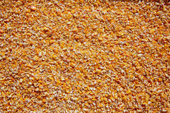 Corn seeds low milled seeds texture background Stock Image