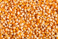 Corn seeds Royalty Free Stock Photos