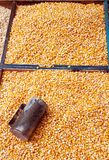 Corn seeds. Some kind of corn seeds at the market Royalty Free Stock Photo