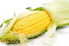 Corn Series 01 Stock Photo