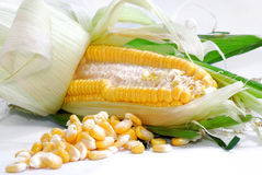Corn Series 02 Stock Photography