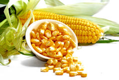 Corn Series 03 Stock Images