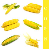 Corn set Stock Photos