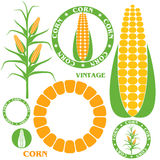 Corn. Set Stock Photography