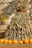 Corn Sheaf and pumpkins Royalty Free Stock Images