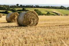Corn sheaves and sea, Cornwall Royalty Free Stock Photo