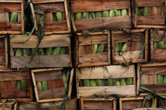 Corn for Shipment Stock Image