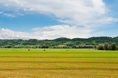 Corn Shoots Stock Images