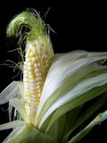 Ear of corn illluminated Stock Image
