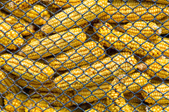 Corn in silo Stock Image