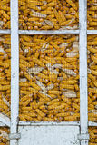 Corn in silo Royalty Free Stock Image