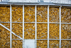 Corn in silo Royalty Free Stock Images