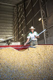 Corn in silo Royalty Free Stock Photo
