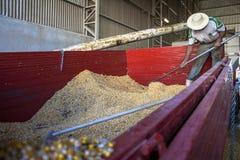 Corn in silo Royalty Free Stock Image