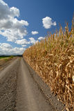 Corn And Skies Stock Photos