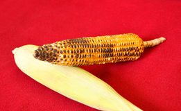 Corn and skin Royalty Free Stock Image