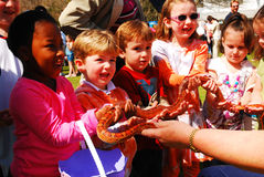 Corn Snake Demonstration. A diverse group of school children feel the skin of a corn snake at a science demonstration Royalty Free Stock Images