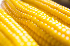 Corn in soft focus Royalty Free Stock Image