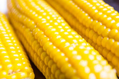 Corn in soft focus Royalty Free Stock Photo