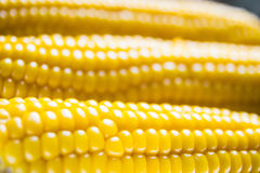 Corn in soft focus Royalty Free Stock Photos