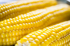 Corn in soft focus Royalty Free Stock Images