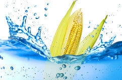 Corn splash Stock Images