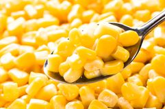 Corn on a spoon Stock Photo