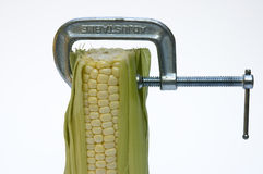 Corn Squeeze Royalty Free Stock Photo