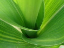 Corn Stalk with Spider Stock Photos