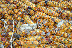 Corn storage Royalty Free Stock Images