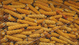 Corn storage, ideal for background Royalty Free Stock Photo