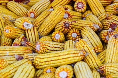 Corn stored for winter background Royalty Free Stock Photography